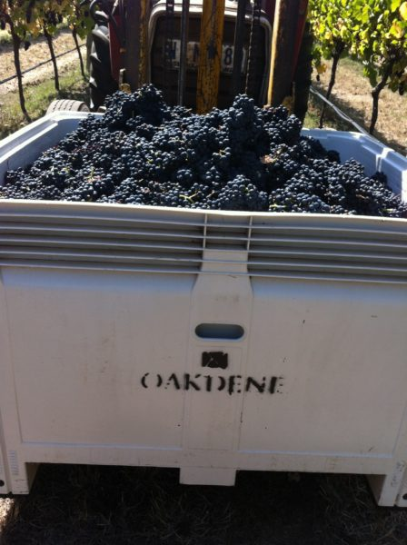 Steven Paul // Oakdene Wines