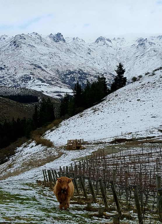 DOMAINE-THOMSON, Central Otago, NZ