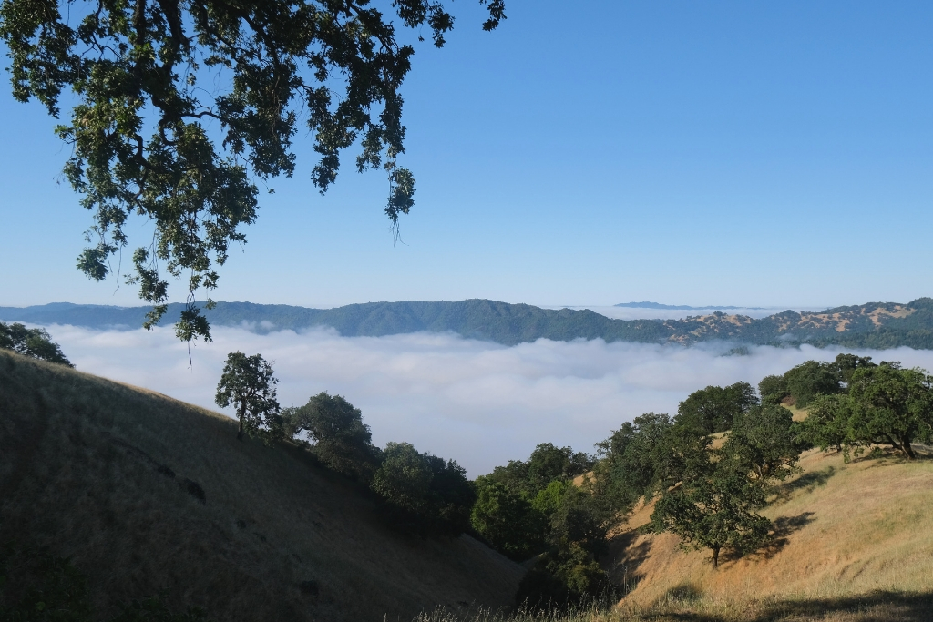 MEET SONOMA – Touristic Napa's mellow big sister