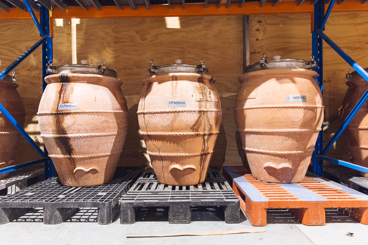 Making wine in amphora with Trofeo Estate