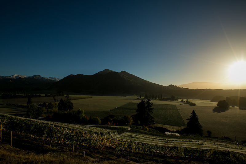 MAUDE WINES // Central Otago, NZ
